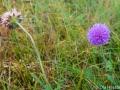 Blommor i mitten av oktober - Dalstorp