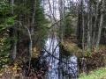 Natur i Dalstorp