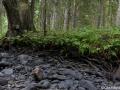 Jälmån norr om Dalstorpasjön