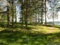 Vid Einars udde, Dalstorp