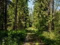 Skogsstig, gamla vägen, i närheten av huset