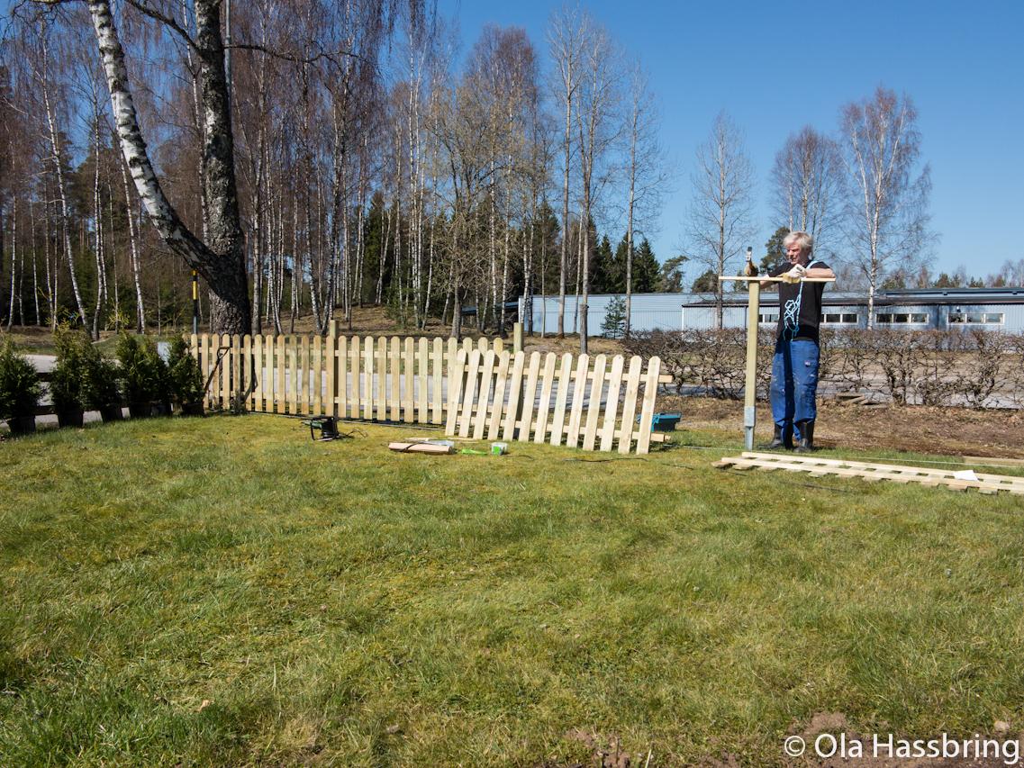 Inge hjälper till att sätta upp staket