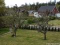 Apel och det okända trädet
